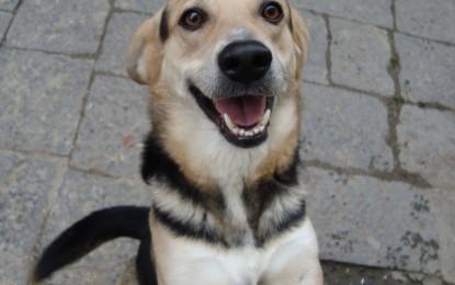 A Guagnano una campagna di sterilizzazione dei cani padronali per combattere il randagismo