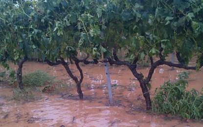 Tempesta di grandine nelle terre del negroamaro. Distrutti vigneti e olivi secolari