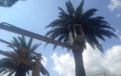 Interventi nella villa guagnanese, via i ratti e le palme secche