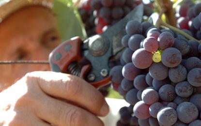 """Domenica """"Cantine Aperte in Vendemmia"""" per i cultori del vino"""