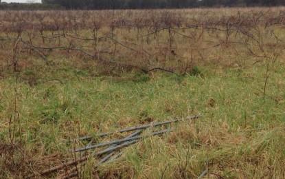 Sorpresi a rubare pali di ferro nelle campagne guagnanesi, scattano le manette per tre ragazzi
