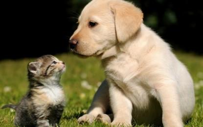 """Nasce """"Qua la zampa"""", la rubrica dedicata a cani e gatti in cerca d'amore"""