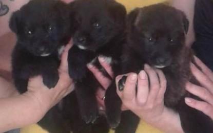Trovati a Salice tre cuccioli abbandonati, ora cercano casa