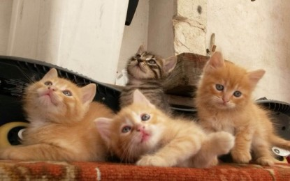 Gattini in cerca di casa, un nostro lettore chiede un gesto d'amore