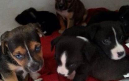 Trovati altri cuccioli abbandonati, ora cercano casa