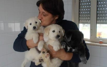 """A Salice la più alta percentuale di cani di proprietà iscritti all'anagrafe canina regionale. Merito dell'Associazione """"San Francesco Amici degli Animali"""""""