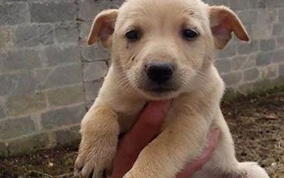 Richiesta d'aiuto per 4 cuccioli, cercano urgentemente casa