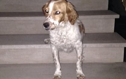 Trovato un cagnolino alla periferia di Guagnano, forse si è smarrito. Qualcuno lo riconosce?