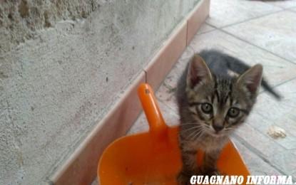 Tutti adottati i 9 gattini guagnanesi
