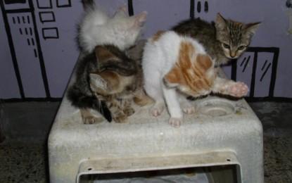 Gattini abbandonati cercano casa