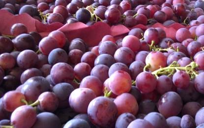 Sagra del Vino e dell'Uva Cardinal: al via il 3° Concorso di Disegno e Poesia rivolto ai bambini guagnanesi