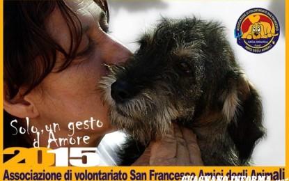 Stasera a Salice uno stand per aiutare cagnolini e gattini in difficoltà. Basta poco per regalare sorrisi