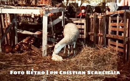 Lieto evento al presepe vivente di Guagnano: è venuto al mondo un agnellino