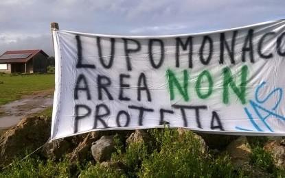 """La macchia di """"Lupomonaco"""" in stato di incuria, a Veglie scatta la protesta degli ambientalisti"""