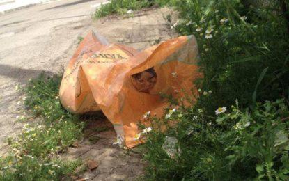 Elio non ce l'ha fatta, il gatto ritrovato a Salice in una busta dell'immondizia è morto La crudeltà umana ha avuto la meglio ancora un volta. L'Associazione San Francesco: «Nel nostro paese esiste gente senza cuore».