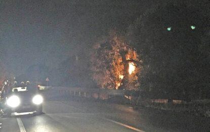 Un rogo distrugge un ulivo secolare a ridosso di via Provinciale. I Carabinieri e la Polizia Municipale di Guagnano scongiurano il peggio