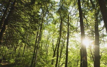 Trovato morto in un bosco il militare originario di Salice scomparso qualche giorno fa a Udine