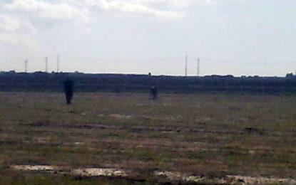 Bizzarro incontro sulla Guagnano-San Pancrazio: un vitello passeggia tra le auto sulla carreggiata