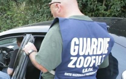 Scomparsi sette cuccioli di una cagnetta di Leverano, indagano le Guardie Zoofile dell'ENPA