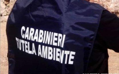 Rifiuti e fanghi in un'azienda vitivinicola di Campi Salentina, scatta il sequestro